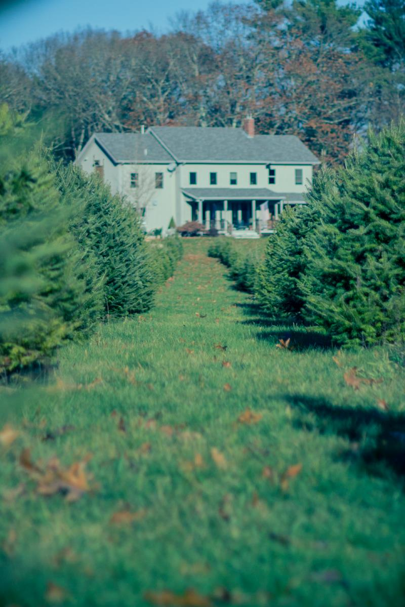 Varieties Of Christmas Trees